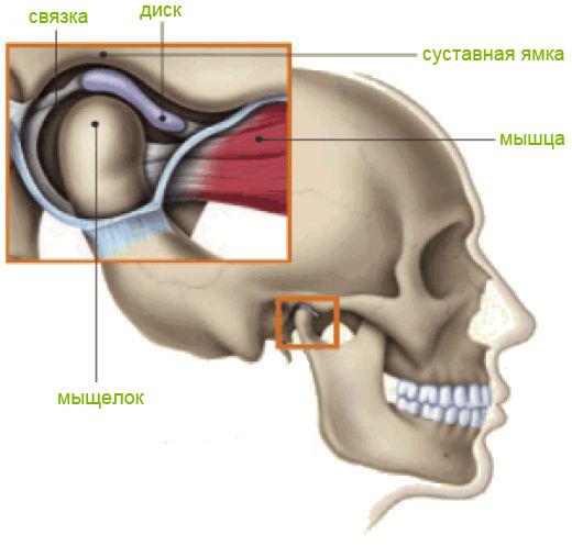 Нахождение уха восочно челюстной сустав болят суставы пальцев после родов