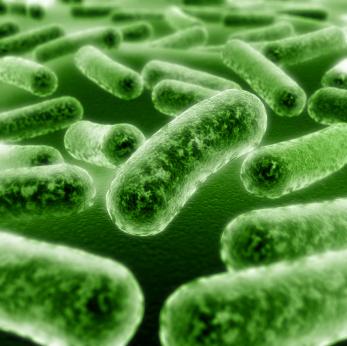 Бактерия, вызывающая гингивит, может манипулировать иммунной системой