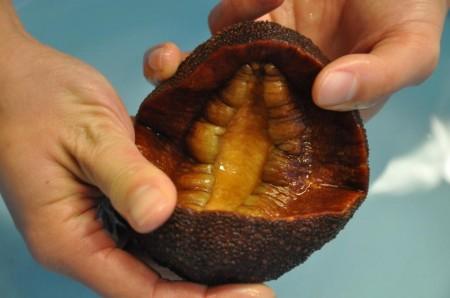 Применение зубов моллюска для улучшения работы солнечных батaрей